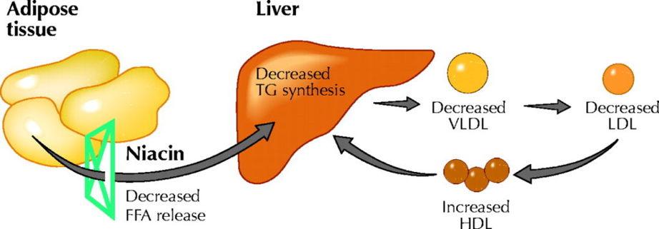 niacin-for-cholesterol