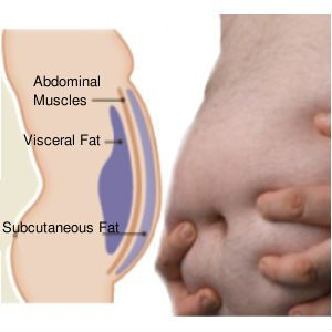 visceral-bell-fat-toxins