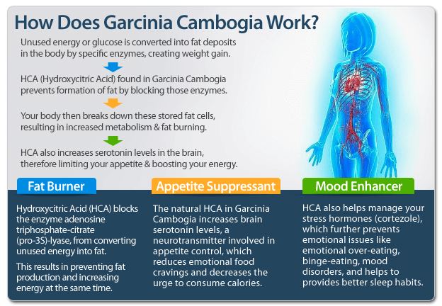 How-Does-Garcinia-Cambogia Extra Work
