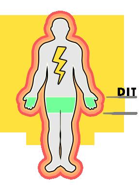 Fexaramine Thermogenesis
