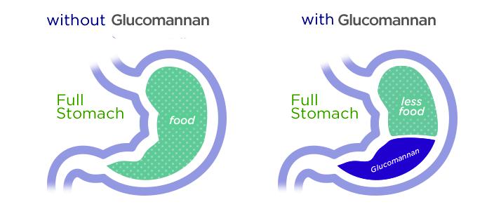 glucomannan-Mechanism_of_Action