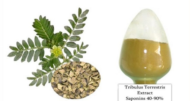 Tribulus-Terrestris-L-Fruit-Powder